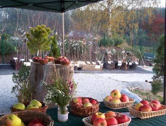 Výstava ovocných dřevin 2017