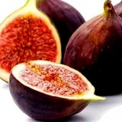 Ficus carica Peretta
