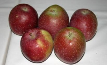 Jeptiška (syn. Železné jablko)