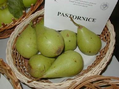 Pastornice